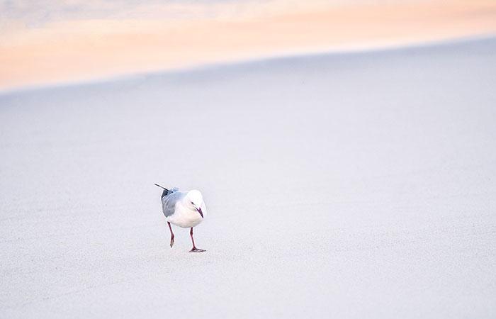 Tranquil, beachside location